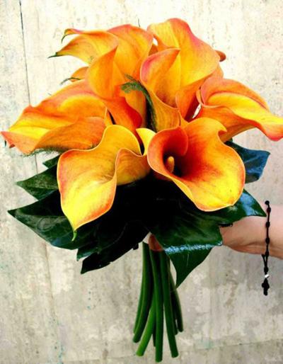 baccara-floristas-sencillo